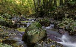 岩石河, Toplica,克罗地亚 库存图片