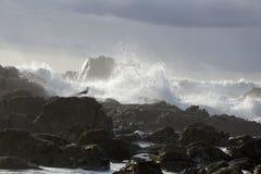 岩石海岸的风大浪急的海面 库存图片