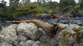 岩石海岸线在不列颠哥伦比亚省 免版税库存图片