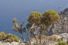 岩石海岸线的野生盆景树植物在希腊海岛泰伦佐斯岛上 免版税图库摄影