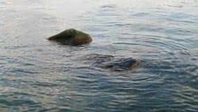 岩石海岸线 影视素材