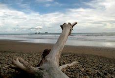 岩石海滩的漂流木头 免版税库存照片