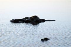 岩石海运 免版税图库摄影