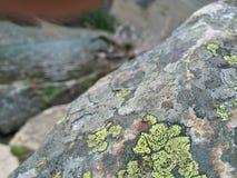 岩石海藻 库存图片