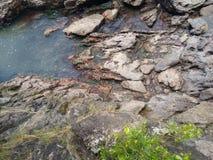 岩石海滩 免版税图库摄影