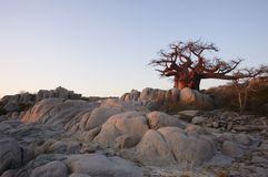 岩石生存 库存图片