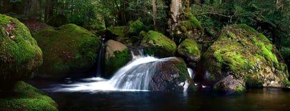 岩石生苔的河 免版税库存图片