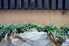 岩石的小植物 库存图片