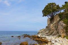 从岩石的木头 免版税图库摄影