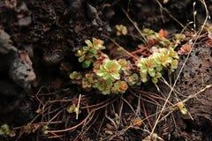 岩石的植物 免版税库存照片