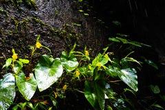 岩石的植物 库存图片