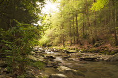 岩石的河床 免版税库存图片