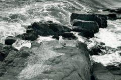 岩石的海岸 图库摄影