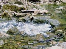 岩石秋天水池 库存图片
