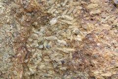 岩石米化石泰国 免版税库存照片