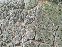 岩石粗砺的纹理地衣光滑的形式 免版税库存照片