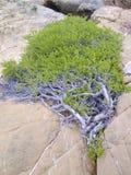 岩石结构树 免版税库存图片