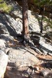 岩石结构树 库存照片