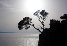 岩石结构树 库存例证