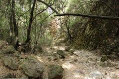 岩石足迹在森林里 库存照片