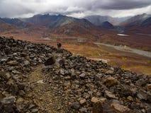 岩石足迹,阿拉斯加的山景色在秋天, Denali国家公园 免版税图库摄影