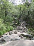 岩石道路在森林里 免版税库存照片