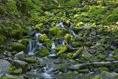 岩石雨林小河 库存图片