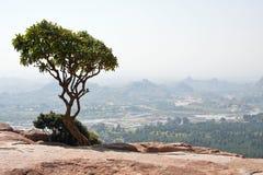 岩石顶部结构树 免版税库存图片