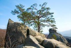 岩石顶部结构树 免版税库存照片