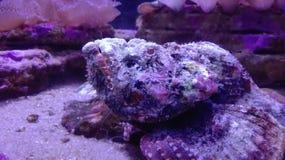 岩石鱼 库存照片