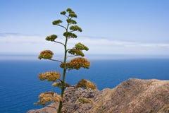 岩石黄雀色海岸海岛la的palma 免版税库存图片