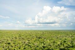 从黑岩石,卡松古上面的森林地  免版税库存图片