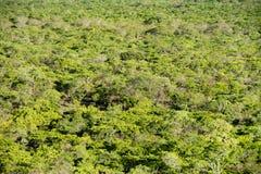 从黑岩石,卡松古国家公园上面的森林地  免版税图库摄影
