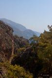 岩石,树Sougia, Lissos,克利特希腊 免版税图库摄影