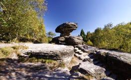 岩石结构各种各样的形状密集的绿色成长围拢的 库存照片