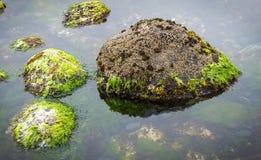 岩石水池细节 库存图片
