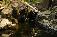 岩石细节在水中在黑河峡谷 库存图片