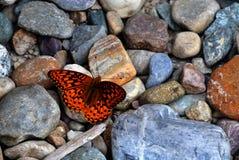 岩石&蝴蝶 库存图片