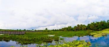 岩礁绿色全景沼泽地 免版税库存照片