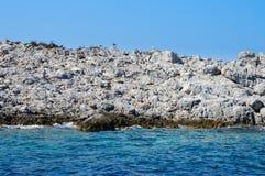 岩质岛和海鸥 库存照片