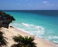 岸上大棕榈树 免版税库存照片