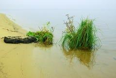 岸上灌木草湖 图库摄影