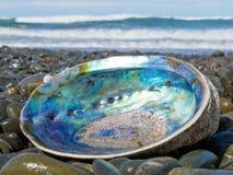 岸上鲍鱼珍珠层paua被洗涤的壳发光 库存图片