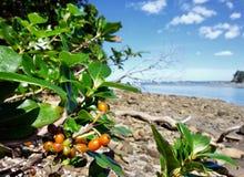 岸的植物 免版税库存图片