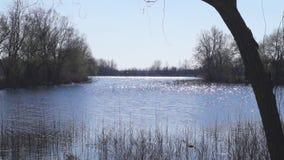 从岸的湖视图 股票录像