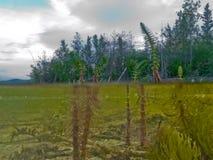 岸边的生态系北方森林taiga湖岸 免版税图库摄影