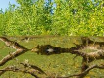 岸边的生态系taiga湖浅岸水 免版税图库摄影