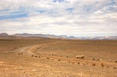 峡谷以色列ramon牛拉车旅行 库存照片