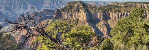 峡谷全部北部外缘 免版税图库摄影