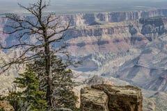 峡谷全部北部外缘 库存图片